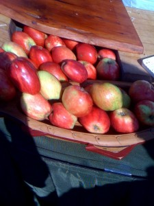 Harvest Farm Apples from Saltspring Island