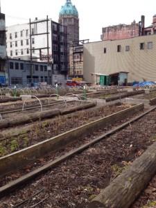 hastings urban farm 2
