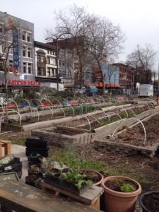 hastings urban farm 4