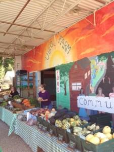 ubc farm market 1